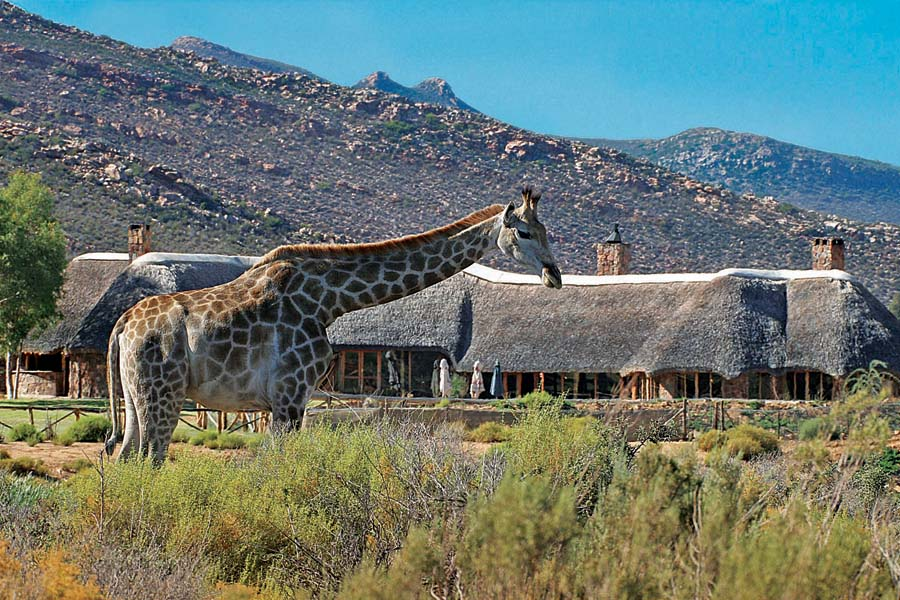 Luxury Safari close to Cape Town in the Western Cape
