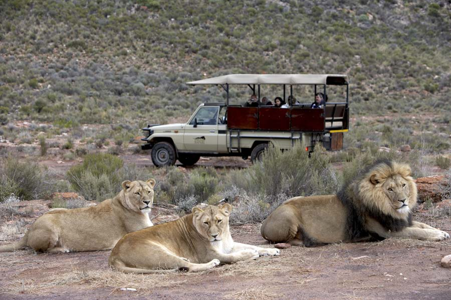 Big 5 Safari in the Western Cape
